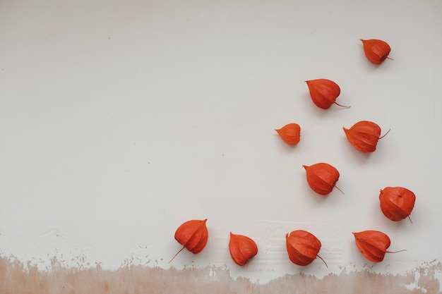 Autumn frame with red physalis flowers on white textured background top view