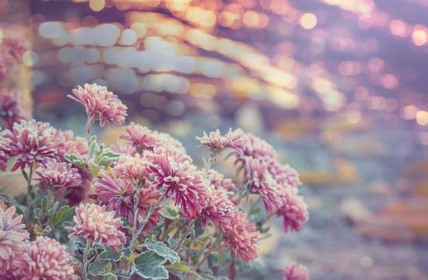 秋の凍った花