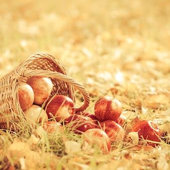 가을 과일 야외. 빨간 사과 바구니입니다. 추수 감사절 휴일 개념입니다. 레트로 톤
