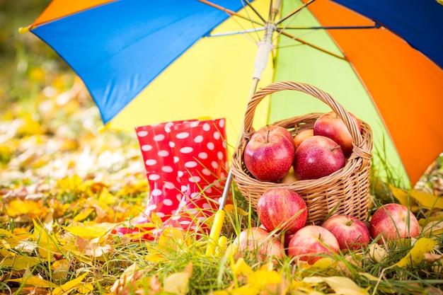 가을 과일 야외. 빨간 사과 바구니입니다. 추수 감사절 휴일 개념
