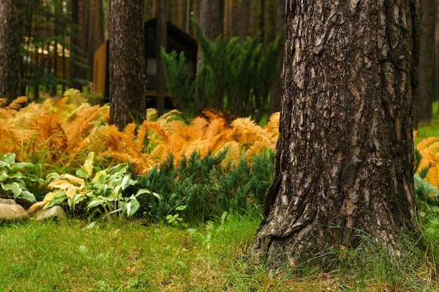Autumn garden landscape with a tree trunk in the foreground and yellowed ferns in the background