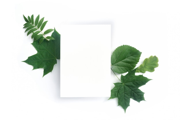 Autumn green leaves and blank card isolated on white
