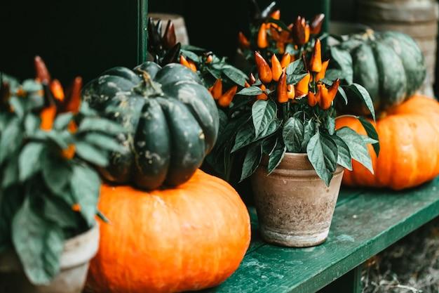 Autumn halloween outdoor decor with pumpkins
