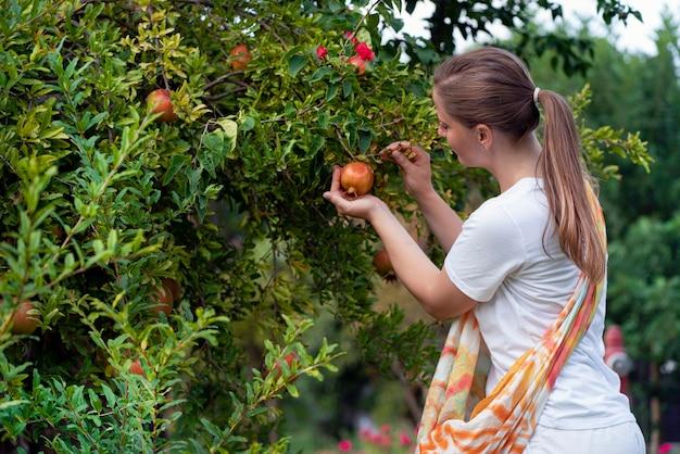 가을 수확. 한 젊은 여성이 나무에서 석류 열매를 따고 있습니다.