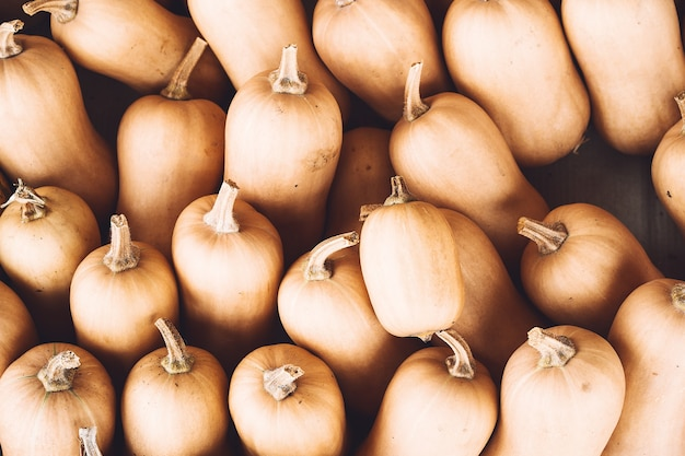가을에는 농장 시장이나 계절 축제에서 다양한 종류의 화려한 호박을 수확합니다.