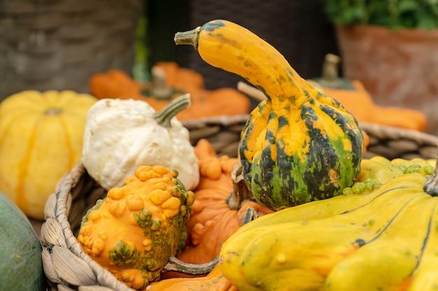 農産物市場での秋の収穫。かごの中の装飾的なカボチャをクローズアップ