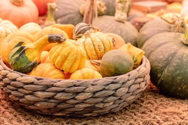 農産物市場での秋の収穫。かごの中の装飾的なカボチャ。