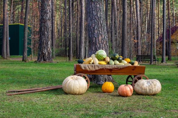 木製カートでのカボチャとズッキーニの秋の収穫