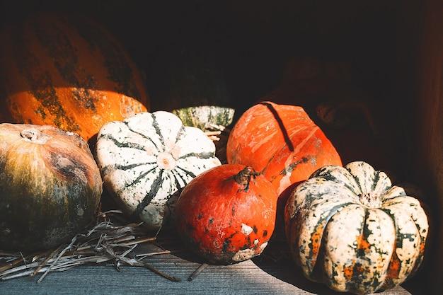 호박의 가을 수확 농장 시장이나 계절 축제에서 주황색 호박 더미