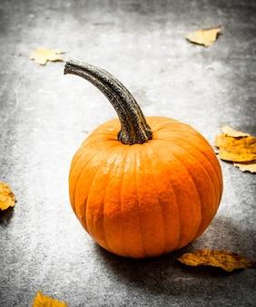 秋の収穫。紅葉のカボチャ。石のテーブルの上。