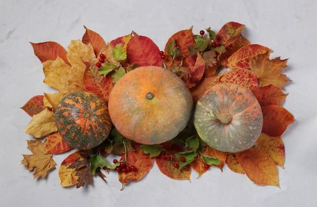 가을 수확: 회색 배경에 호박, 잎, 가막살나무속. 센터피스 추수감사절. 위에서 보기