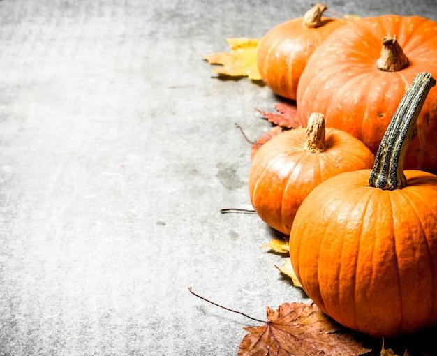 Осенний урожай тыквы с осенними листьями на каменном столе