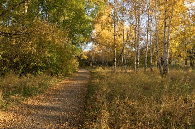 Autumn has come. autumn on a sunny day.