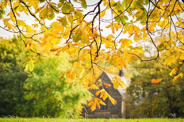 Autumn, horse chestnut leaves
