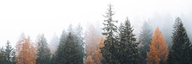 안개가 자욱한 dolomites 계곡, 이탈리아의 가을