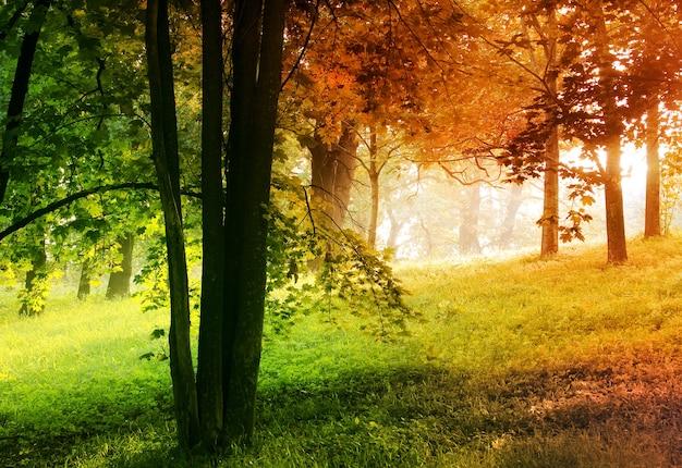 Осень в летнем лесу естественный фон