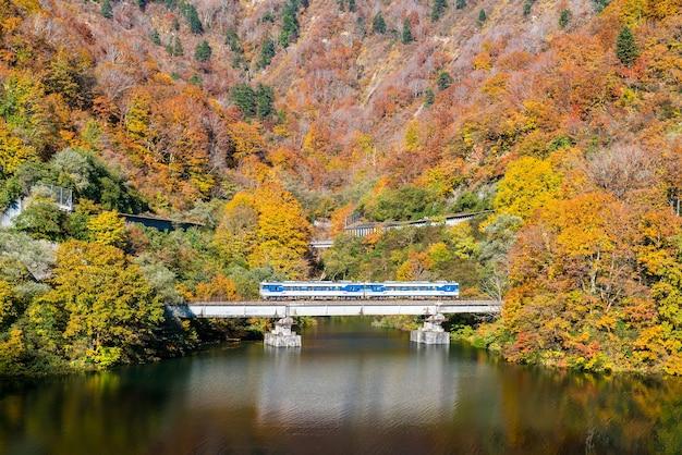 다다미 후쿠시마 일본의 가을