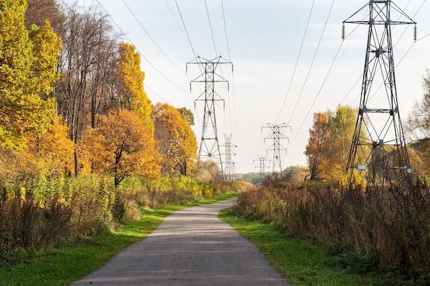 都市公園の秋、黄色の葉の木、