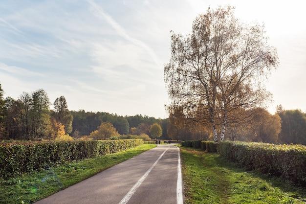 Осень в городском парке, деревья в желтой листве,