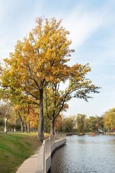 黄色い葉の木々がある都市公園の秋