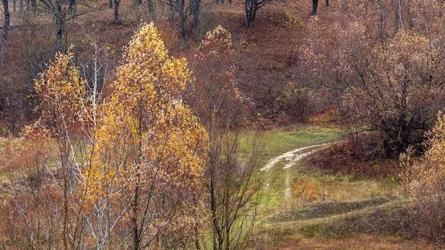 秋の森、秋の森の未舗装路