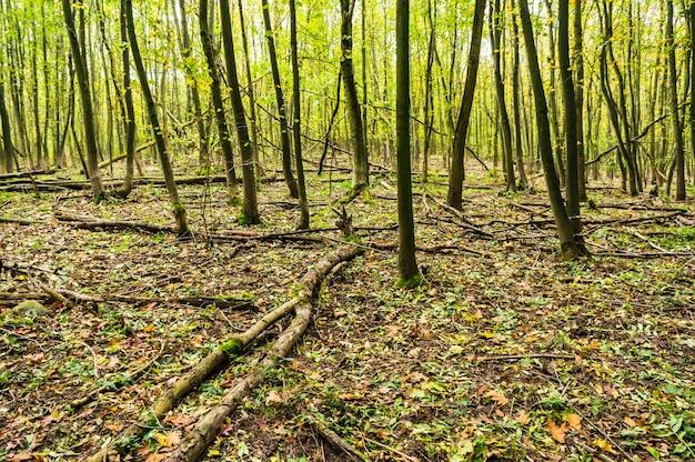 숲의 가을