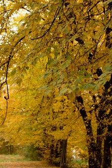 Осень в парке. красивый осенний спокойный пейзаж природы. понятие красоты осенней природы.