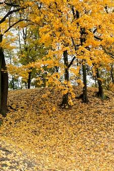 공원의 가을-가을에 촬영 된 나무와 단풍, 위치-공원,