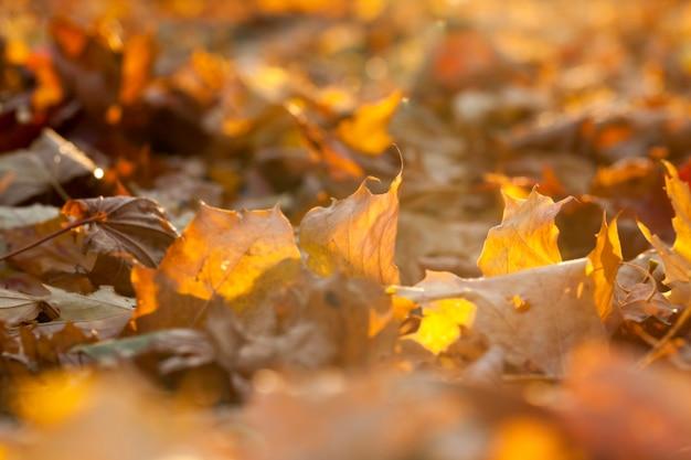 Осенью в парке сфотографировали деревья и листву осенью