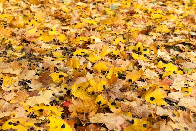 공원의 가을, 가을의 나무와 단풍, 위치-공원,