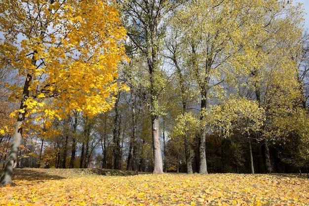 公園の秋、秋の木々や葉、場所-公園、