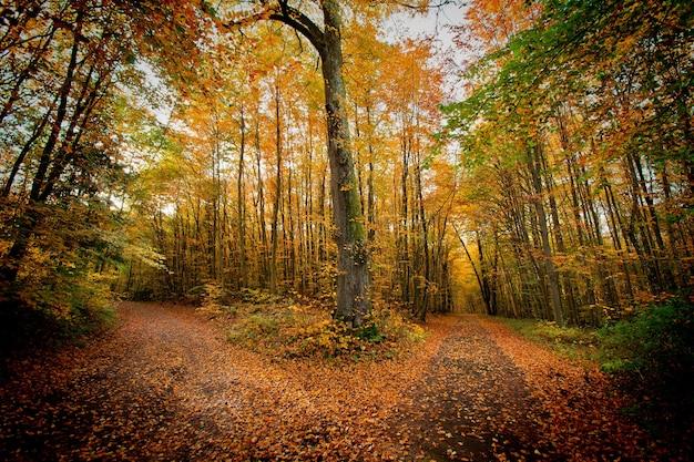 公園の秋。