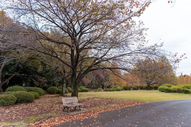 東京、新宿公園の秋