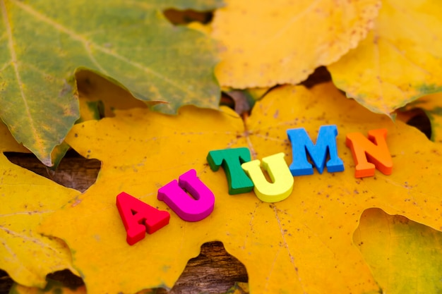 Autumn inscription in colored wooden letters autumn on yellow and green maple leaves