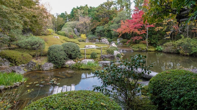 Autumn in japan hunting for red leaves of maple tree kioto