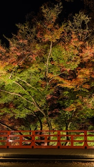 Autumn japanese garden with maple trees at night in kyoto, japan