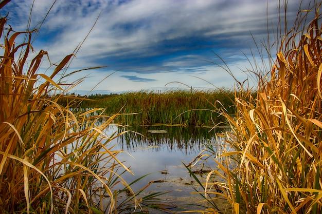 Осеннее озеро в осоке. расслабление и релаксация на пляже. беларусь. солигорск.