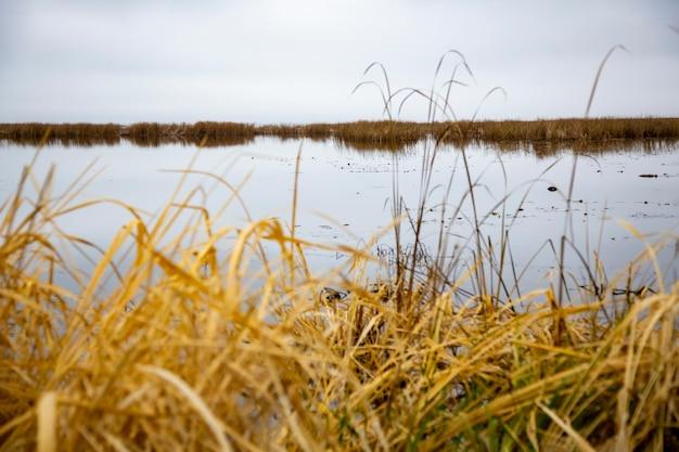 Осеннее озеро пейзаж сухая трава пасмурное небо