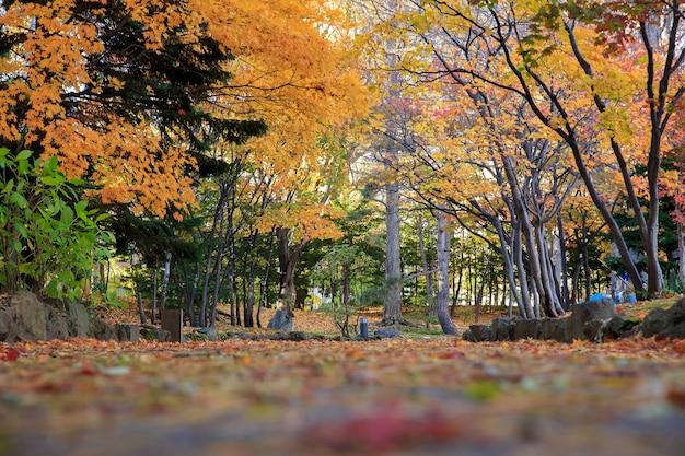 Осенний пейзаж в парке накадзима, город саппоро, япония.