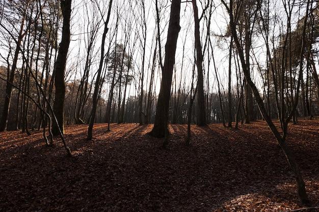 公園の日没または夜明けの秋の風景、低く輝く太陽