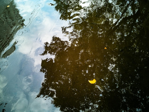 雨黄色の落ち葉が横たわった後、秋の風景の背景秋の木が水たまりに反映されます