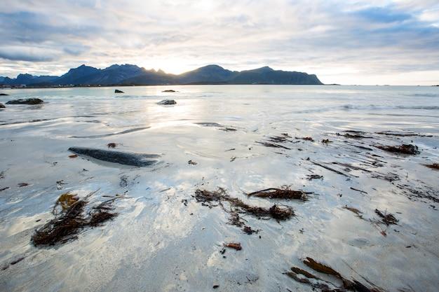 Autumn landscape and beach in lofoten islands, northern norway Premium Photo