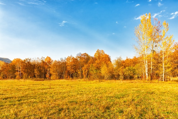 Autumn landscape, a clearing on the outskirts of the forest