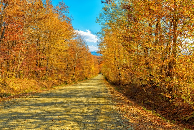 Autumn landscape, dirt road in the forest