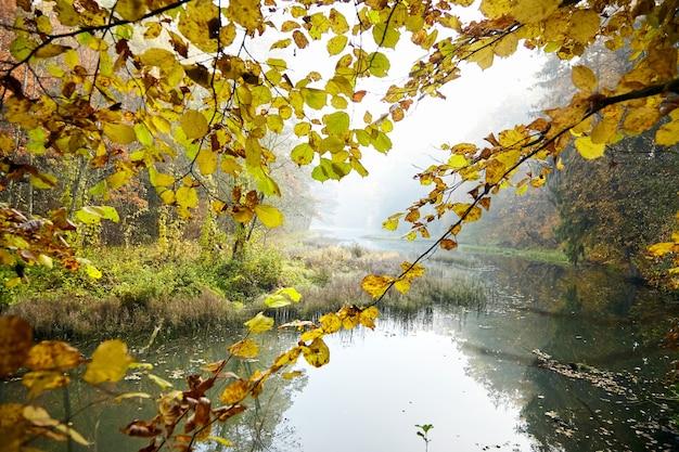 秋の風景。霧の森と川。霧の中の朝の自然。木の枝。黄色の葉
