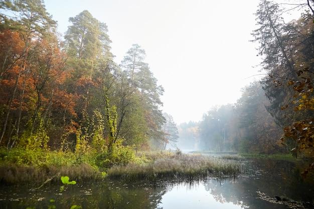 秋の風景。霧の森と川。霧の中の朝の自然