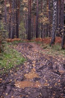 Осенний пейзаж лес и дорога, покрытая дождем, с глубокими колеями в грязи смена времен года