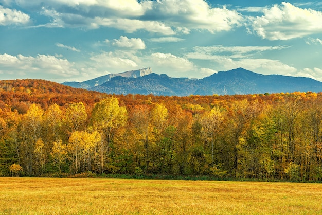 Autumn landscape of a forest area and a clearing in the mountains