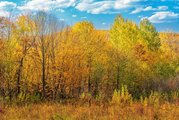 Autumn landscape of a forest glade