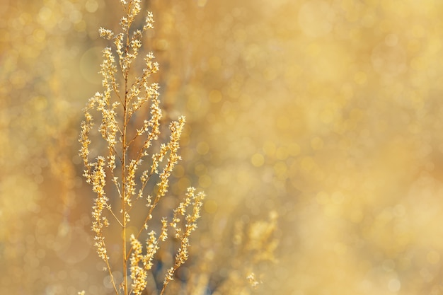 Autumn landscape. golden autumn grass.